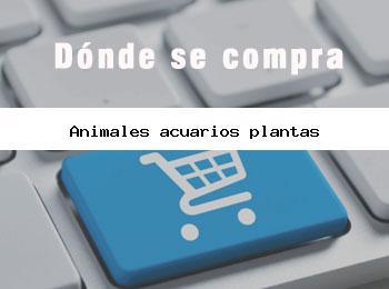 Donde se compra animales acuarios plantas
