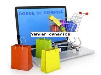 vender canarios