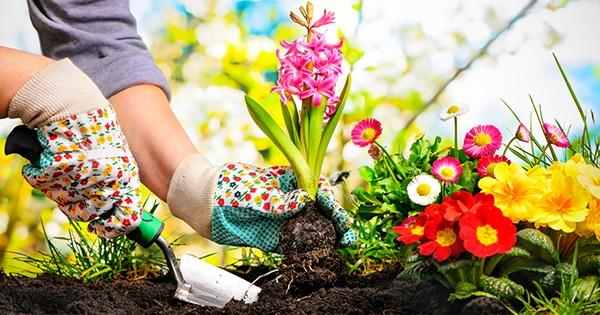 Productos Jardinería