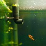 Animales acuarios filtros