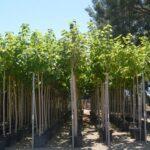 Productos jardineria arboles