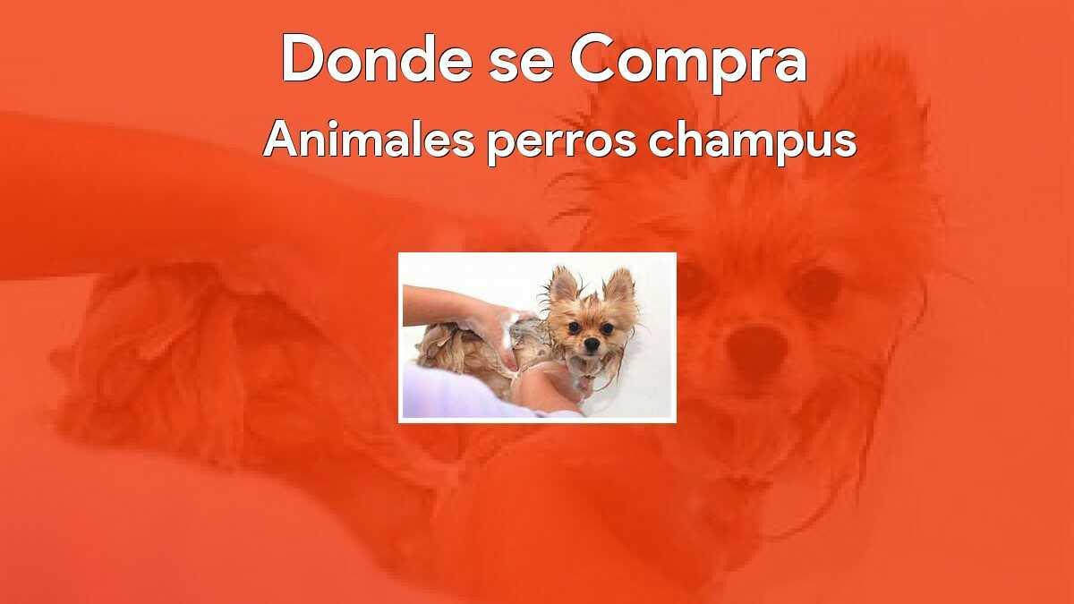 Animales perros champus